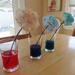 Dyeing-flowers-3
