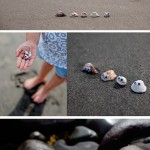 Mascotas con conchas pintadas